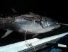 market-fish