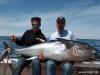 stellwagen bluefin