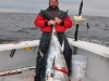 Cape Cod Bay Tuna