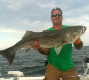 """cape cod bay striper"""